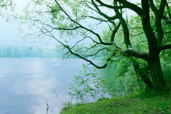moody-landscape-old-tree-lake-morning-as-nature-background-wallpaper-scenery-28812824