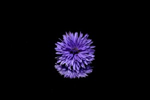 aster-188045_1920