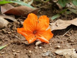 orange-184838_1280