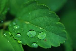 leaf-8701_1920